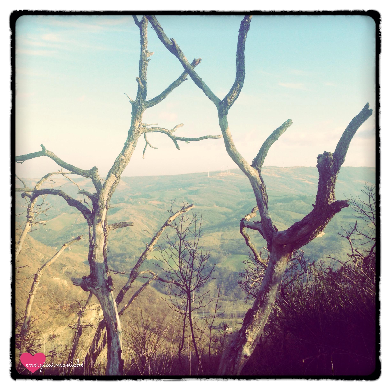 foto due alberi